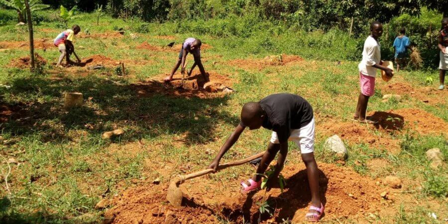 Scott Bader Commonwealth grant winner, Ace Africa, complete their fruit tree planting project